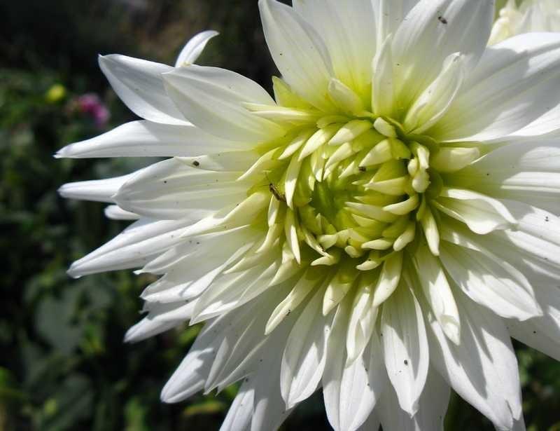 Садовые цветы на урале фото